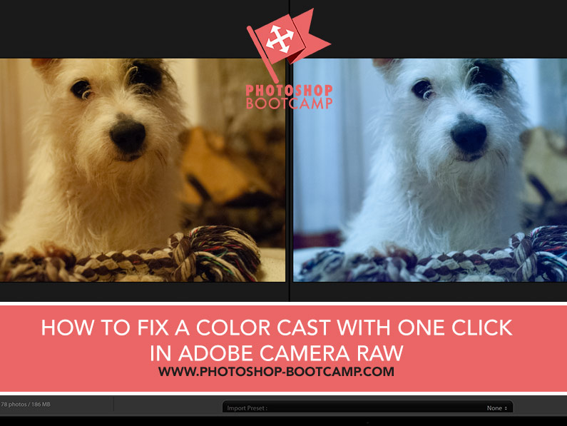 How To Fix A Color Cast With The White Balance Tool In